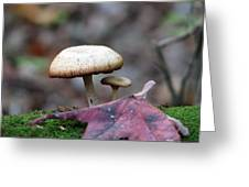 Toad Stool Iv Greeting Card