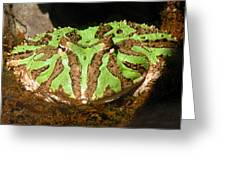 Toad With Green Stripes Greeting Card