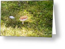 Toadstool Grows On A Forest Floor. Greeting Card