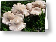 Toadstools Greeting Card