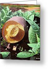 Tobacco Picker Greeting Card by Jose Manuel Abraham