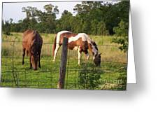 Tobiano And Bay Horses Greeting Card