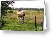 Tobiano Horse In Field Greeting Card