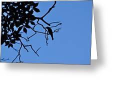 Todays Art 1239 Greeting Card