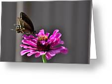 Todays Art 1406 Greeting Card