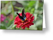 Todays Art 1407 Greeting Card