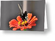 Todays Art 1409 Greeting Card