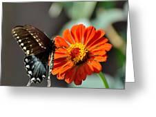 Todays Art 1410 Greeting Card