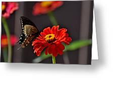 Todays Art 1412 Greeting Card