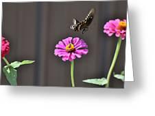 Todays Art 1417 Greeting Card
