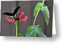Todays Art 1422 Greeting Card