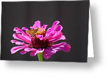 Todays Art 1426 Greeting Card