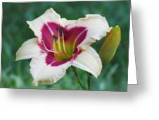 Todd Monroe - Daylily Greeting Card