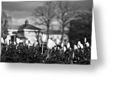 Together Bw Greeting Card
