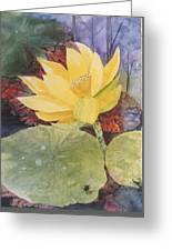 Tohopekaliga Lotus 2 Greeting Card