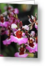 Tolumnia Pink Panther Orchid Greeting Card