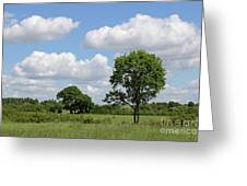 Tolworth Court Nature Reserve In Surrey Greeting Card