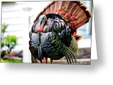 Male Turkey Greeting Card