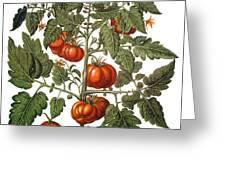 Tomato & Watermelon 1613 Greeting Card