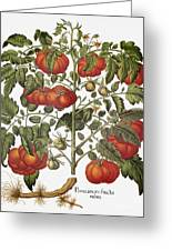 Tomato, 1613 Greeting Card