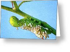 Tomato Hornworm Greeting Card