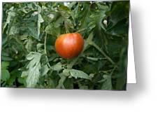 Tomato Plants In A Nebraska Garden Greeting Card