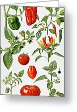 Tomatoes And Related Vegetables Greeting Card