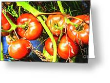 Tomatoes Hanging Like Grapes From Vines Go1 3711a3 Greeting Card