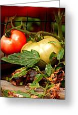 Tomatoes In Red N Green Greeting Card