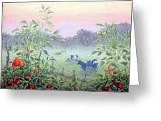 Tomatoes In The Mist Greeting Card