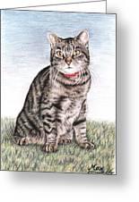 Tomcat Max Greeting Card