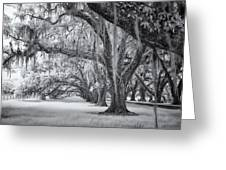 Tomotley Plantation Oaks Greeting Card