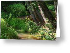 Toms Creek In Late Summer Greeting Card