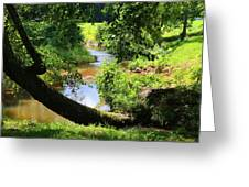 Toms Creek In Summer 1 Greeting Card