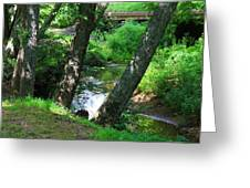 Toms Creek In Summer 3 Greeting Card