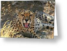 Tongue And Cheek Cheetah Greeting Card