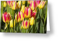 Too Many Tulips Greeting Card