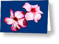 Too Pink Greeting Card