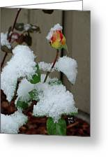 Too Soon Winter - Yellow Rose Greeting Card
