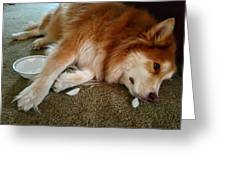 Too Tired For Treats Greeting Card