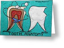 Tooth Anatomy Greeting Card