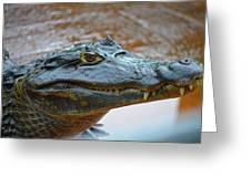 Toothy Gator Greeting Card