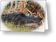 Alligator Toothy Grin 2 Greeting Card