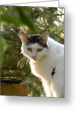 Top Cat Of The Ranch Greeting Card