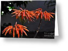 Top Of Aloe Vera Greeting Card