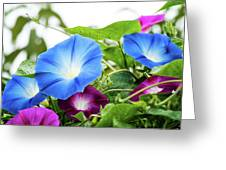 Top Of The Morning Glories Greeting Card