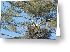 Top Of The Pine Greeting Card