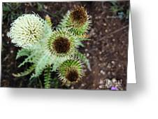 Top Thistle  Greeting Card
