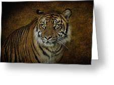 Topaz Tiger  Greeting Card