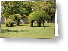 Topiary Elephants, Thailand Greeting Card
